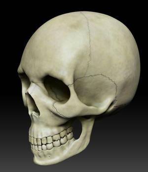 Skull Overworked