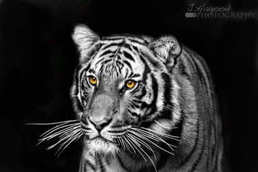 Golden Eyes by jhagood23