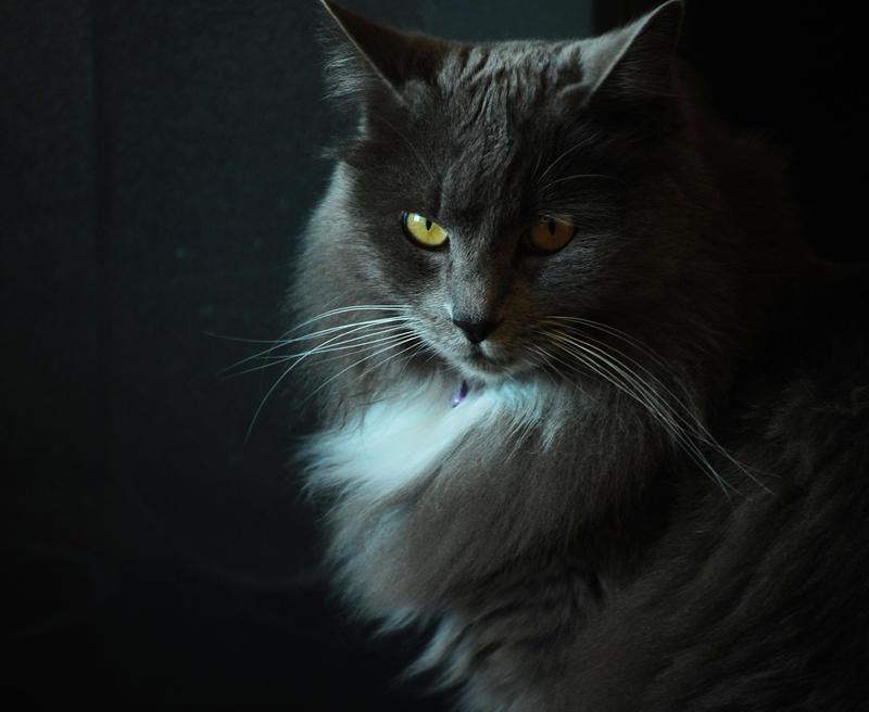 Bekijkt profiel - Aragon Revenously_hungry_cat_by_Buzzard09