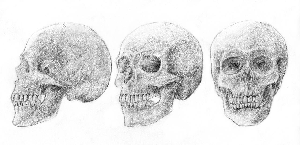 human skulls by arvalis