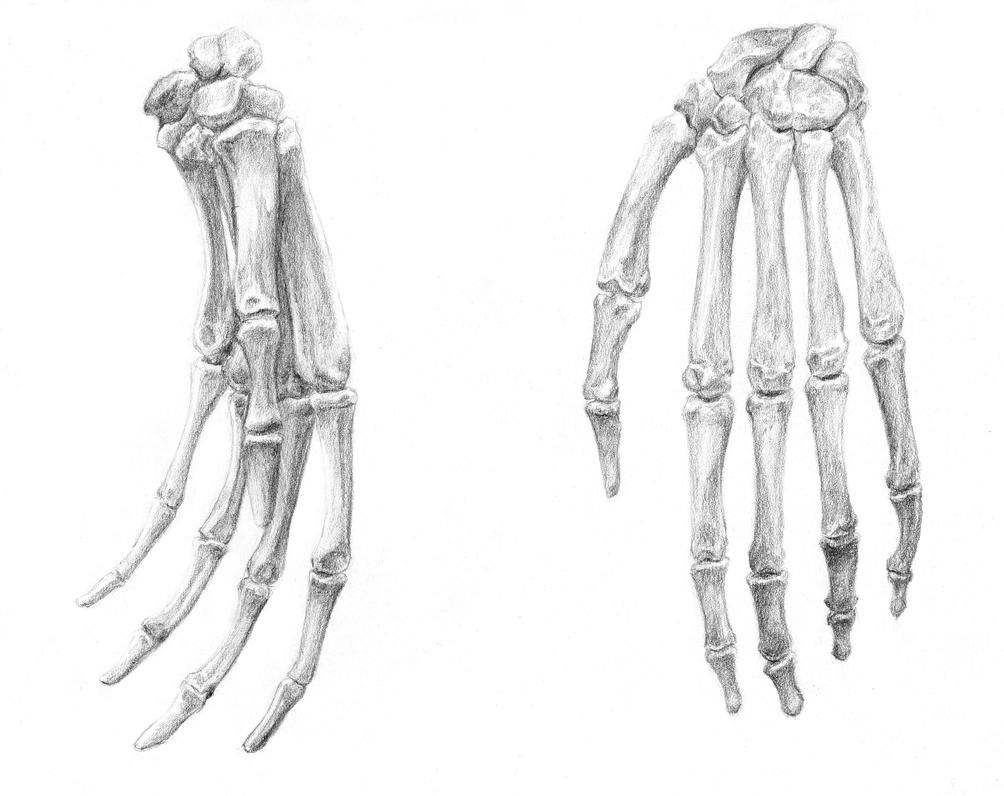 Bones of the Hand by arvalis on DeviantArt
