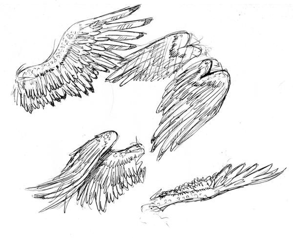 Bird Wings by arvalis on DeviantArt