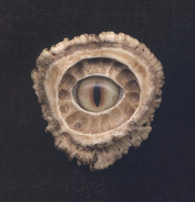 Dragon Eye 3