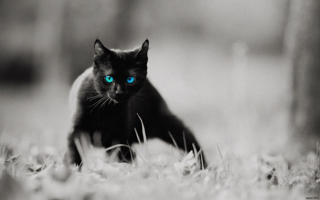 EgFox BLACK CAT - 2011 HD by Eg-Art
