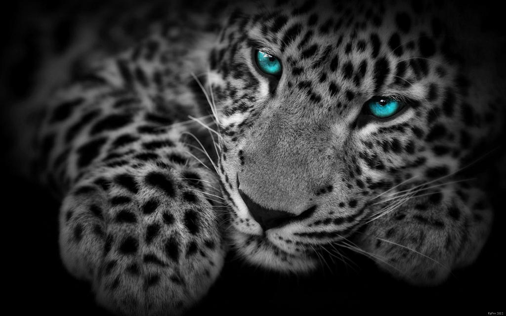 HD wallpapers jaguar skin wallpaper