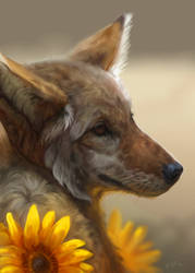 Coyote/Sunflower