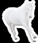 Ghost Horse Pre Cut