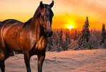 Winter Sunset Arabian