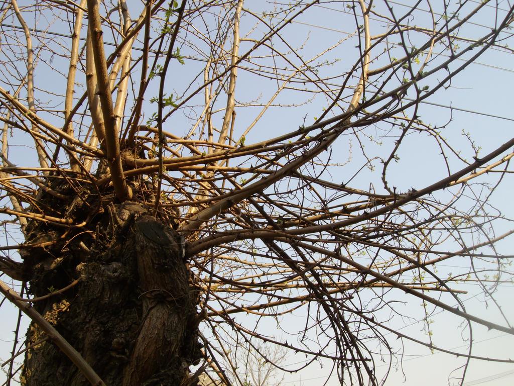 spider web tree by junglechicken on deviantart. Black Bedroom Furniture Sets. Home Design Ideas