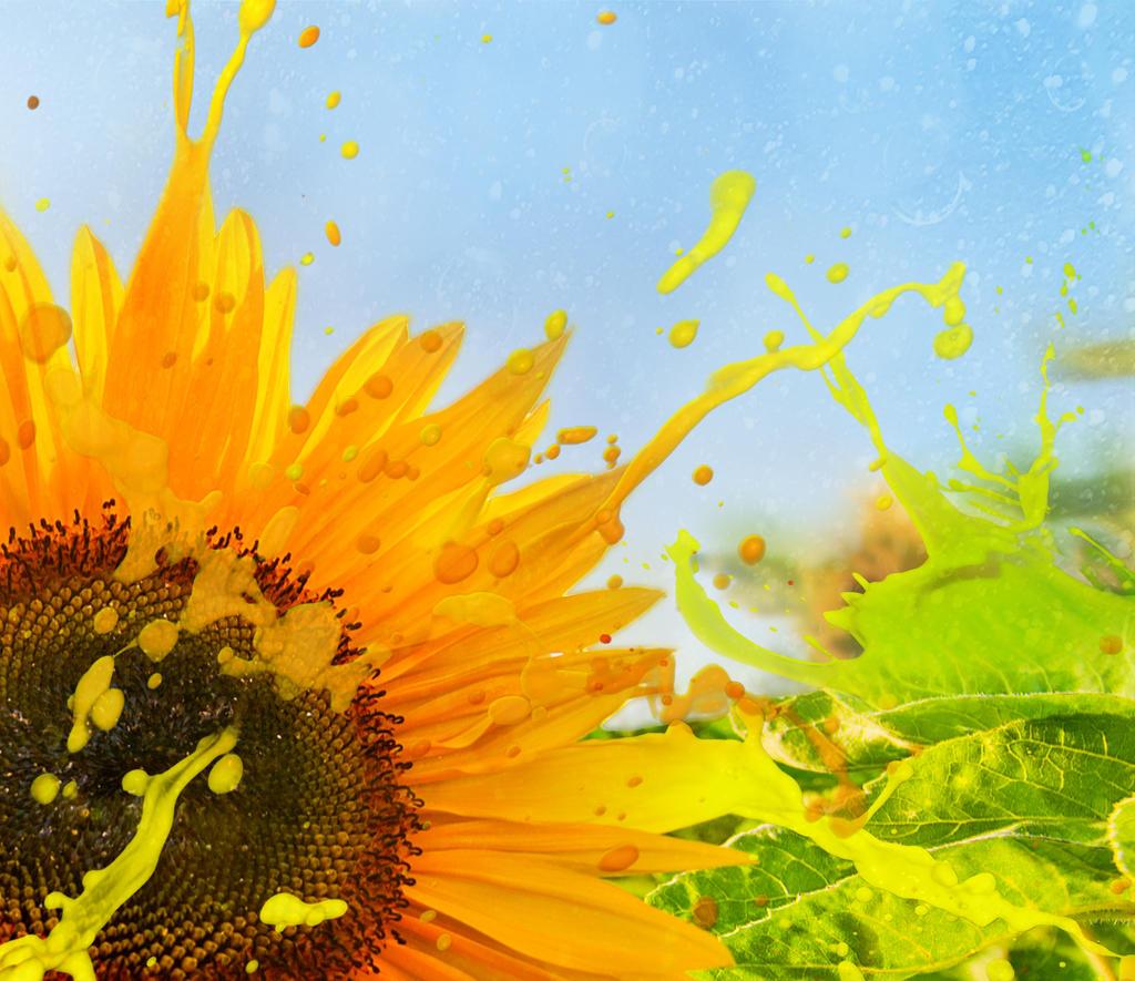 Splashing Sunflower