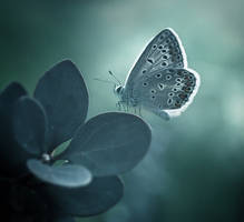 Butterfly 9 by Child0fBodom