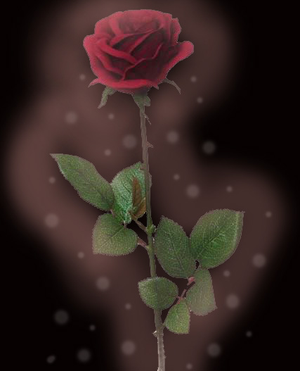 Beauty And The Beast Rose Wallpaper Beauty And The Beast Rose by