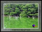 A Perfect Reflection by carlos-teran
