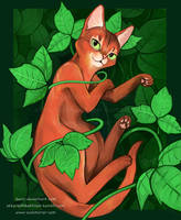 abyssinian cat by keevs