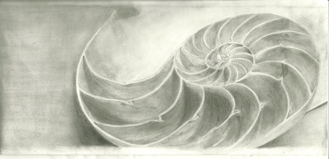 Nautilus Shell Drawing