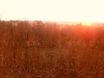 autumn sun by blackberryLollipop