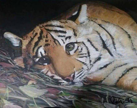 Baby Tiger redone and reposted
