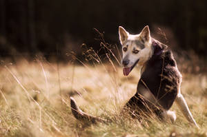 Kuki from dog shelter by Sarkolia