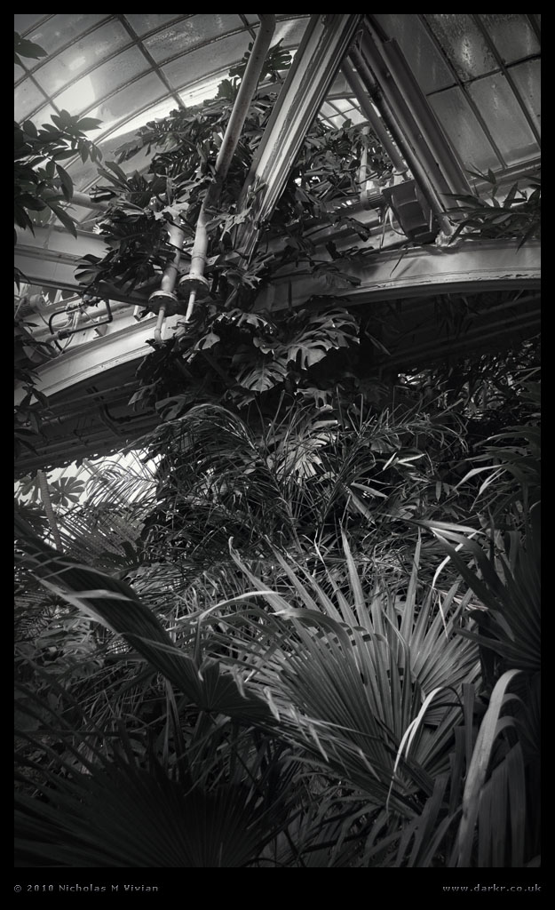 ID534 Palm House by Deviant-Darkr