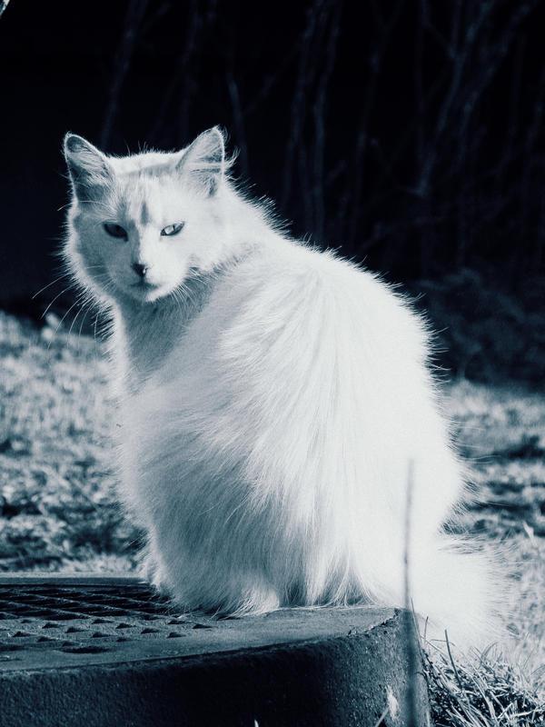 Exam' Liny-Namillky Snow_white_by_SaintSnape