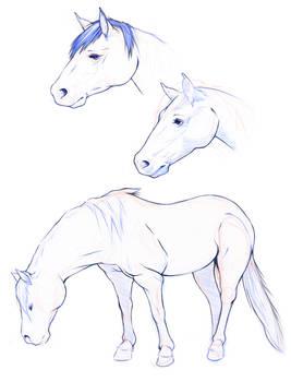 Horses - homeworks -