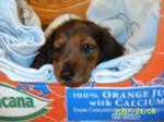 my pup by DannQuixote