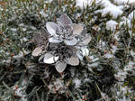 Scalemail Flower - Dodecahedron
