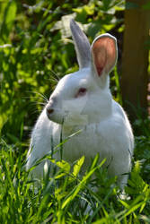 Beautiful bunny day