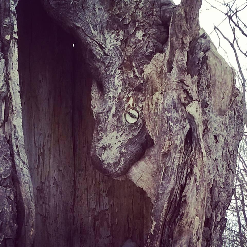 dragon in a tree by imaginaryfriend6