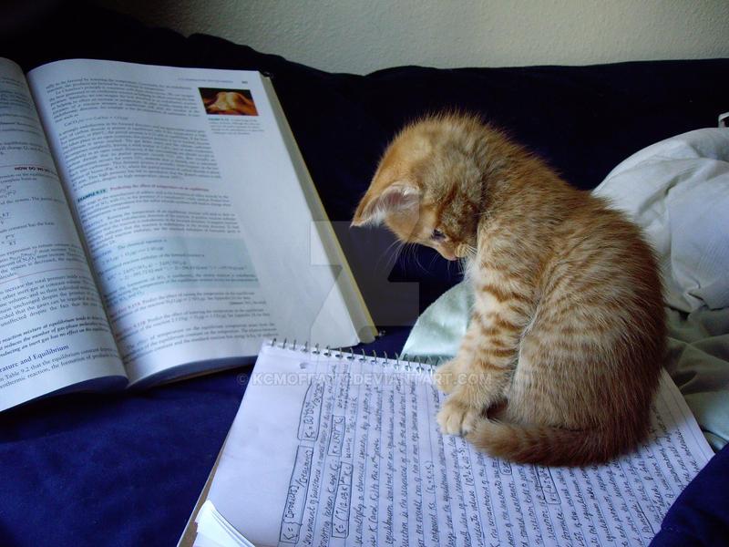Study Time by kcmoffatt on DeviantArt
