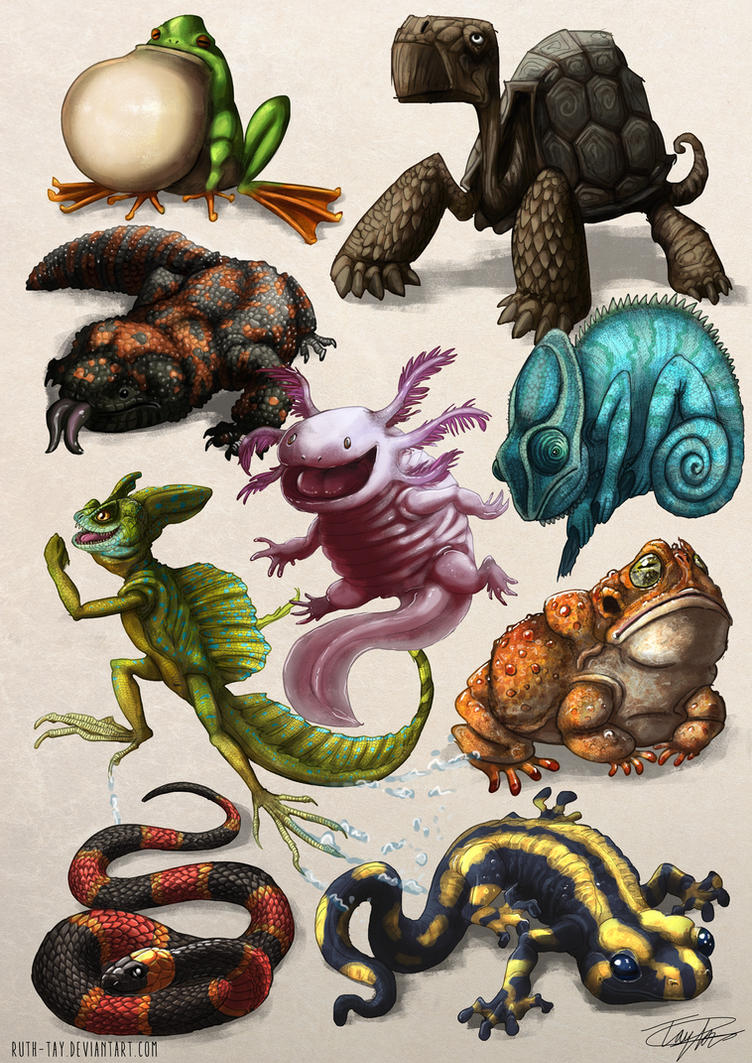 Reptiles and Amphibians by Ruth-Tay on DeviantArt