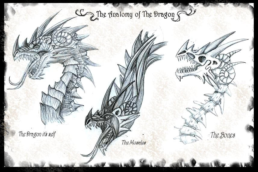 The Anatomy Of The Dragon By Ruth Tay On Deviantart