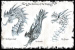 The anatomy of The Dragon