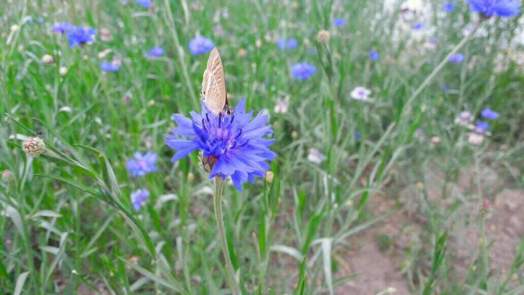 butterfly by mangekyouInsomnia