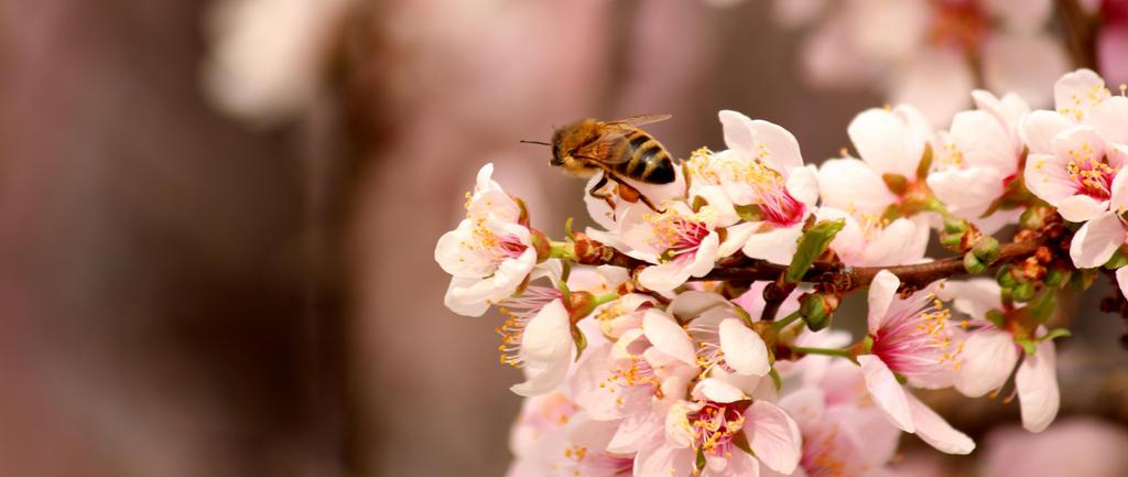 Bee II by Kick-Artist