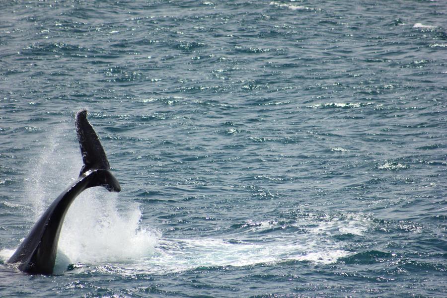 Whale Tail... by Kick-Artist