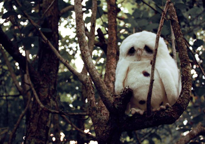sad owl has no elephant friend