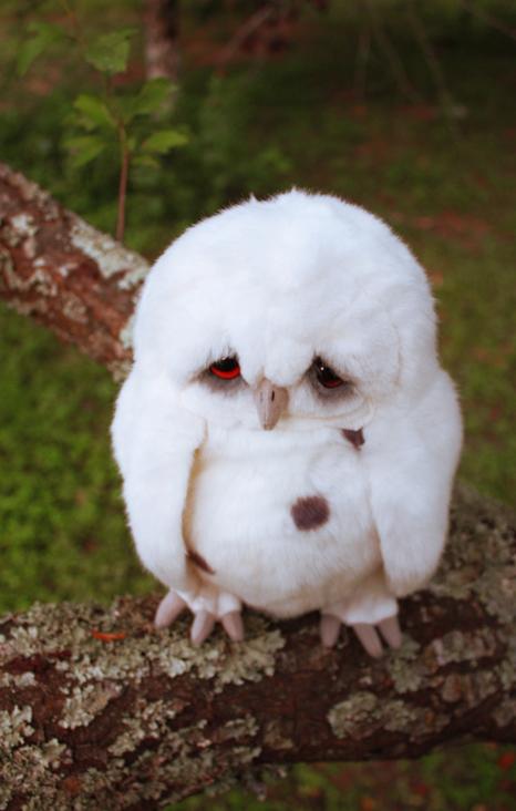 Sad Owl 3 by distasty