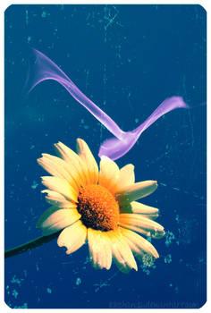 .spiegare i petali