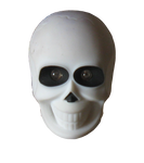 Skull Precut Stock
