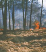 Burning forest background by maslenitsa
