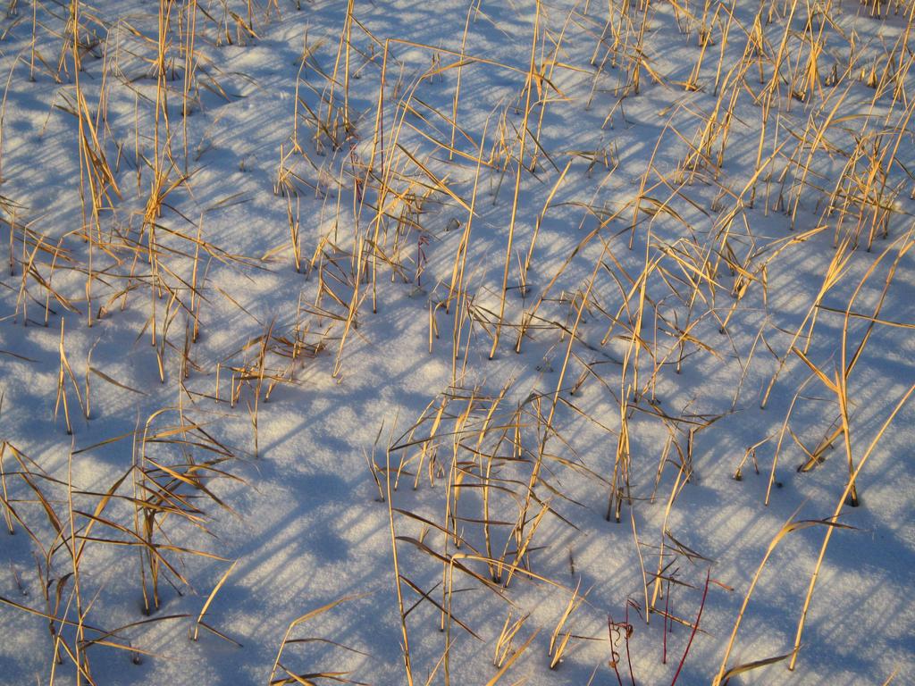 Winter Grassland by Rai-Starstreak