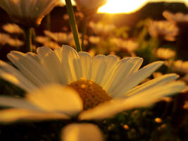 Flowers by SteffenMoggert