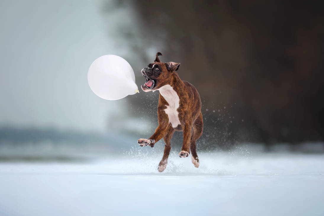 Attack on the balloon by tamasszarka