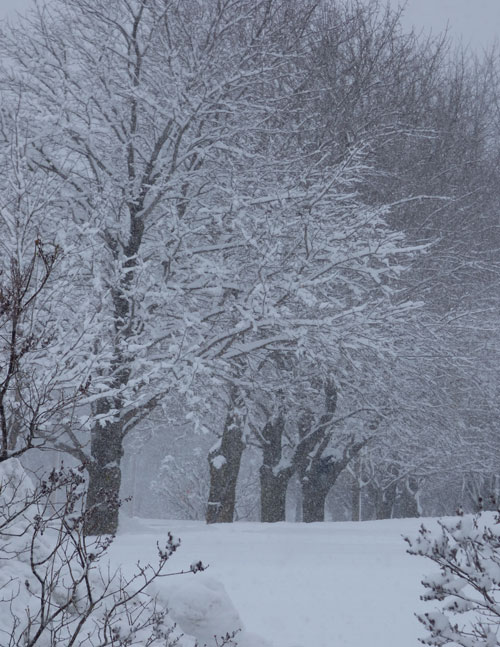 Snow-pic-1 by LBaehman