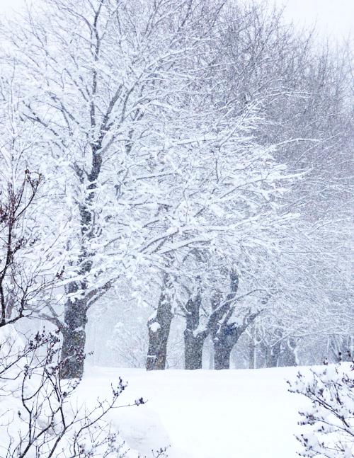 Winter Wonderland by LBaehman