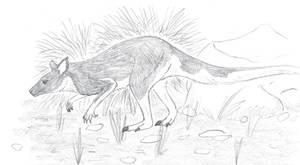 Ambler Wallaby