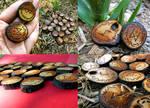 Black Cherry Wood Fall Runes