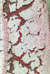 Red Crackle Paint Texture #5