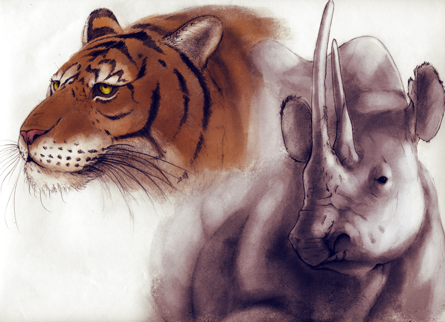 tiger Rhino by SpicerColor